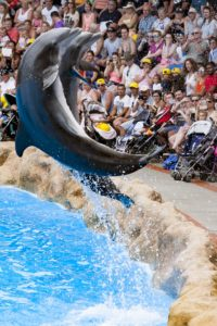 Dolphin performs flip for crowd